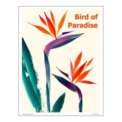 Bird of Paradise Brush Painting Lesson by Nan Rae