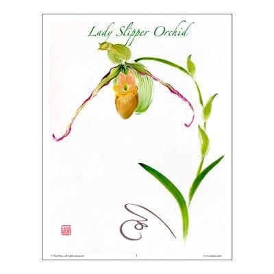 Lady Slipper Orchid Brush Painting Class Lesson by Nan Rae