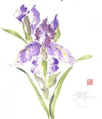 Bearded Iris painting by Nan Rae