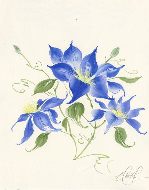 Clematis painting by Nan Rae